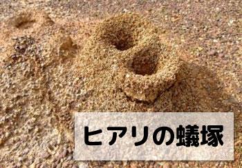 ヒアリの蟻塚の画像