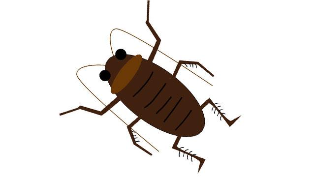 ゴキブリの画像
