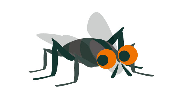 ハエの画像