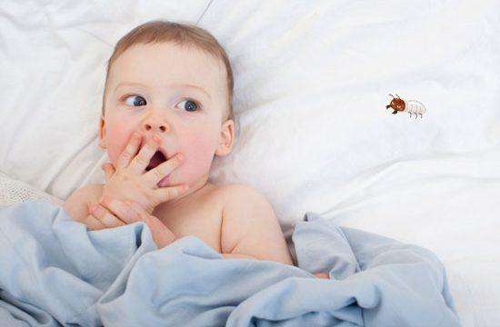 赤ちゃんがいても害虫駆除は大丈夫?